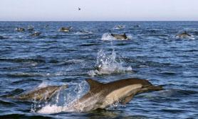 Dolphins Baja Mexico